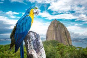 Conheça a Fauna e Flora do Rio de Janeiro