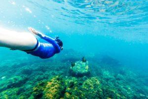 Os melhores lugares para mergulhar no Rio de Janeiro