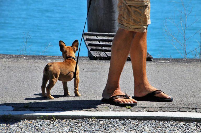 Read more about the article Dicas para passear com seu pet no Rio de Janeiro